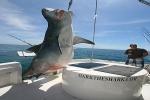 Miami angler lands giant tiger shark