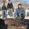 Sixgill Sharks caught in Turkey