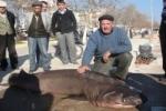 Sixgill Sharks caught in Turkey