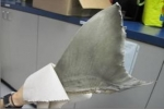 Shark fins seized at California border