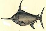 Canadian pelagic longline swordfish fishery gains MSC certification