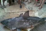 Hefty fine for killing juvenile Great White Shark in New South Wales, Australia