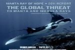 Manta Ray of Hope 2011 Report