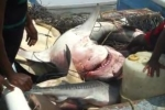 Shark Fishing in Manzan Trinidad
