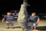 300 kg Blue Pointer caught in Australia