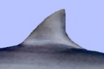 Maryland introduces bill to ban Shark Fins