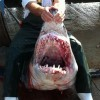 Angler lands big mako shark in Louisiana
