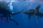 Divers fend off oceanic whitetip shark