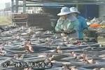 Taiwanese Shark Fin Docu