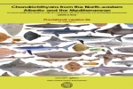 Chondrichthyans from the North-eastern Atlantic and the Mediterranean