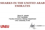 Sharks in the United Arab Emirates