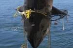 Shark's death a 'rare' opportunity