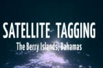 Shark Satellite Tagging – Berry Islands, Bahamas