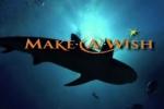 Wishing For Sharks, Shark Lab, Make a Wish