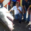Mexican Fisherman lands Great White Shark