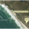 City of Cape Town Releases Report on Fatal Shark Attack at Kogel Bay