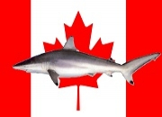 Government of Canada bans shark finning