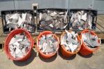 Louisiana: Two Men Arrested For Shark Violations In Plaquemines Parish