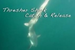 Sustainable Sport Fishing for Thresher Sharks