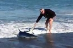 Blue shark stranded after chasing fish in New Zealand