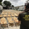 Record-Breaking Seizure of almost 8 tons of Shark Fins in Brazil