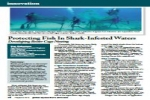Article: Protecting Fish In Shark-Infested Waters