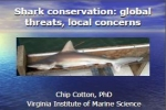 C. Cotton: Shark conservation – global threats, local concerns