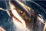 Great White Shark Encounter off Bondi Beach Australia