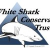 An open letter concerning the unsustainability of shark finning