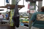 Mako Mania Shark Tournament in Ocean City