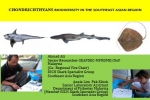 Sharks and Rays in the Southeast Asian Region