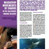 Migratory Movements of Sharks in Galapagos