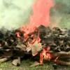 Honduran Authorities Burn Confiscated Shark Fins
