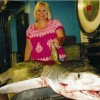 Savannah Woman sets Georgia State Record for Tiger Shark