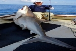 World Record Silvertip Shark caught in East Africa