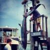 Montauk Marine Basin Tournament 2012