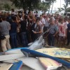 Reunion's Surfers Demand Actions after Fatal Shark Attack