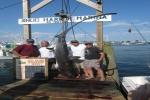 Snug Harbor Shark Tournament 2012