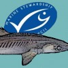 MSC Certificate suspended for US Atlantic spiny dogfish fishery