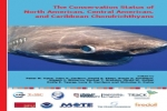 Shark and Ray Conservation Status Revealed in New Expert Report