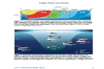 Climate Change Impacts on Pelagic Fishes and Sharks in Australia