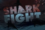 Shark Week 2012: Shark Fight – Shark Hunter's Change of Heart