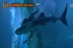Aqua Planet Jeju releases whale shark