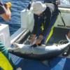 IMAS – Post-release Survival in Mako Sharks