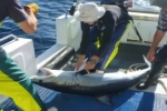 IMAS – Post-release Survival in Mako Sharks