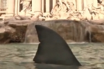 Anti Shark Finning Protest in Rome Italy