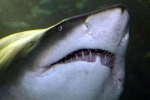 Man attacked by a shark in NSW