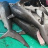 Costa Rica Coast Guard Accidental Shark Fin Bust!