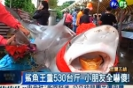 Over 70 sharks as religious offerings in Taiwan
