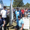 Earlybird Shark Fishing Competition in Tasmania